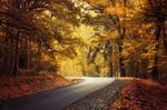 Autumn Journey XXI.