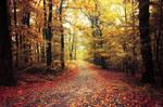 Autumn Walk XXVIII.