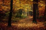 Autumn Walk XXX.