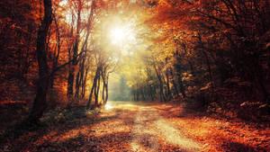 Autumn Walk XXVII. Wallpaper