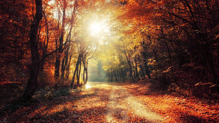 Autumn Walk XXVII. Wallpaper by realityDream