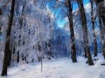 Winter Woods II.