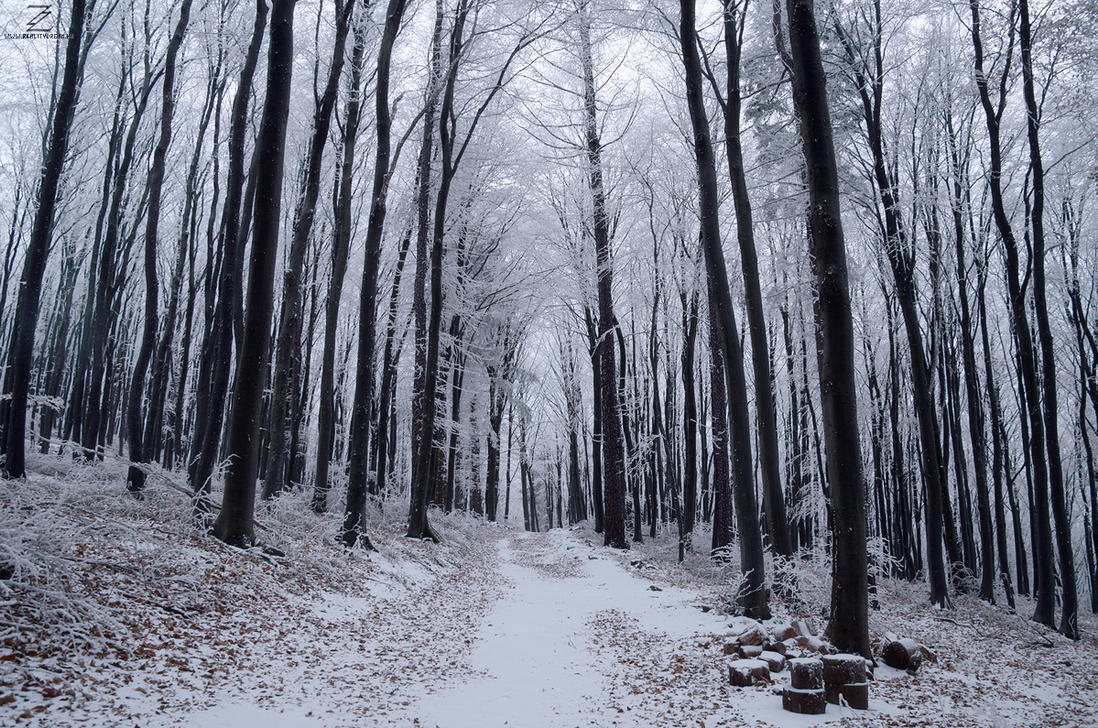 Winter Woods VI. by realityDream