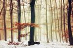 Winter Woods IX.