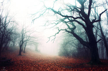 If These Trees Could Talk XXVII. by realityDream