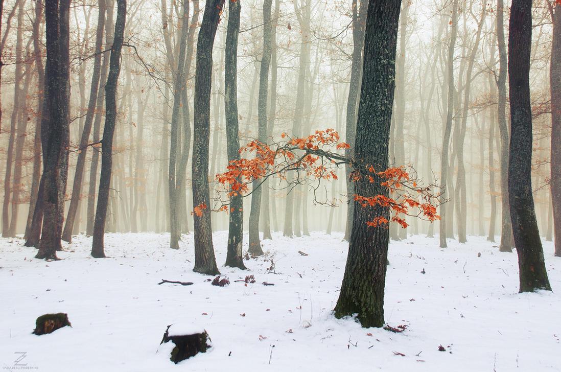 Winter Woods X. by realityDream