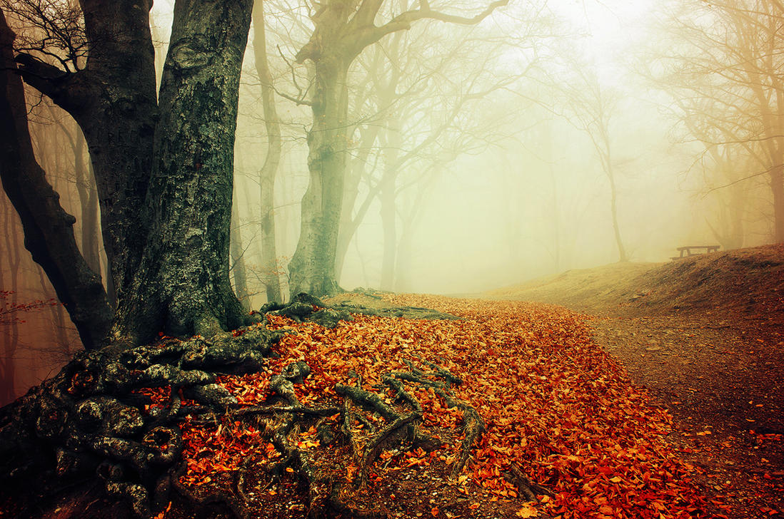 If These Trees Could Talk XXIX. by realityDream