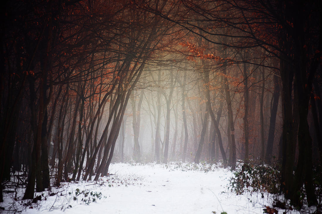 Winter Woods XII. by realityDream