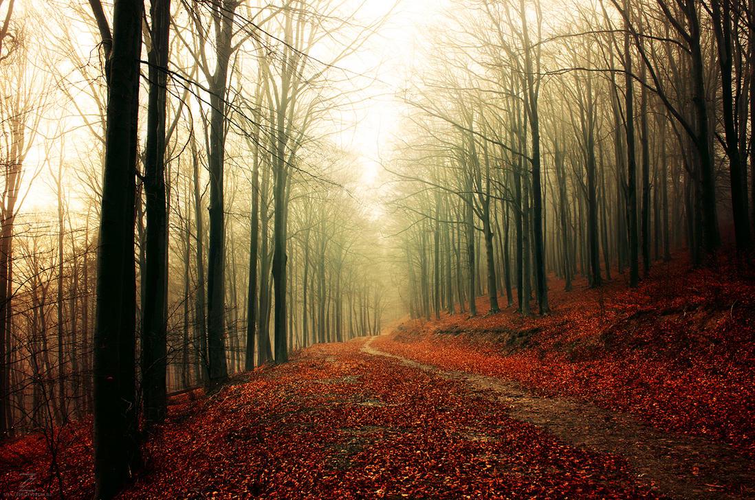 Autumn Walk XXXIII. by realityDream