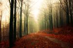 Autumn Walk XXXIII.