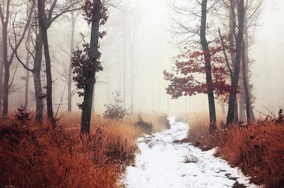 Winter Woods XI. by realityDream