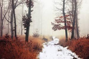 Winter Woods XI.