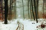 Winter Woods XIV.