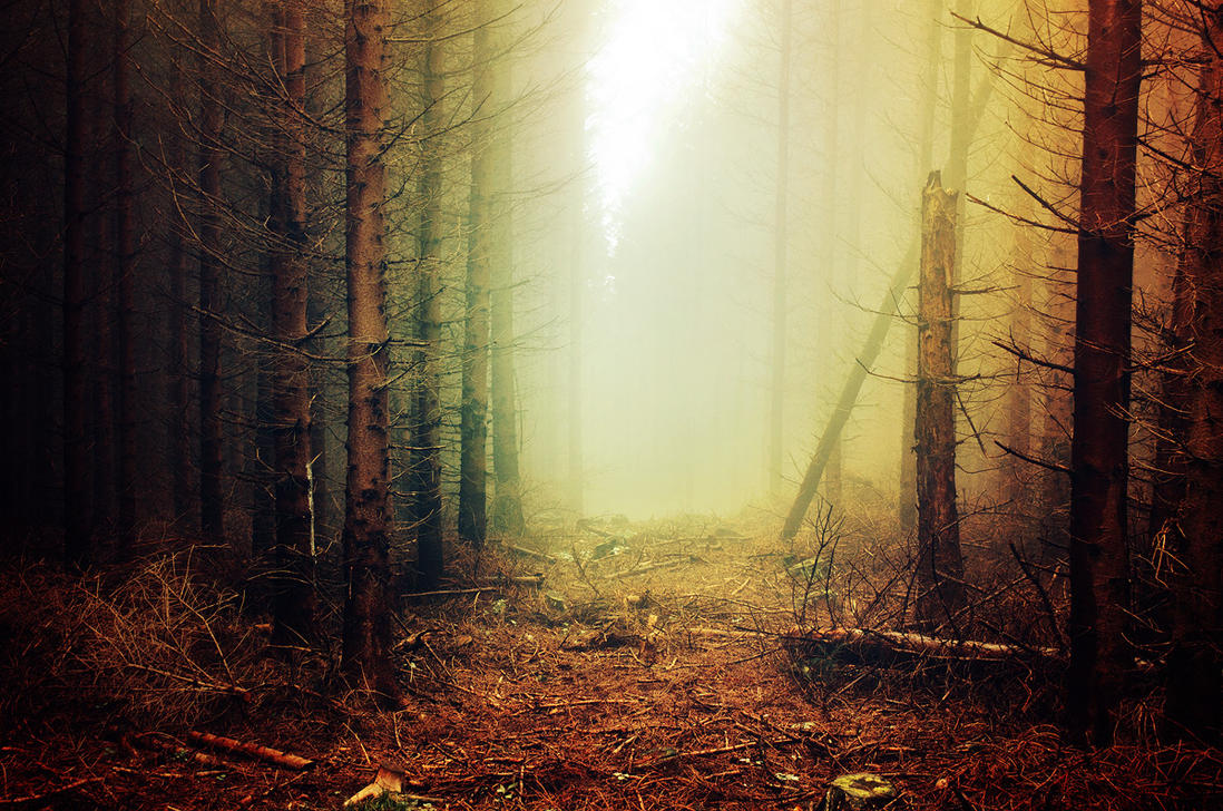 If These Trees Could Talk XXXIV. by realityDream