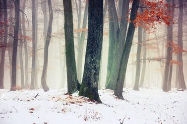 Winter Woods XIII. by realityDream