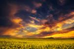 The Luminous Landscape XXV.