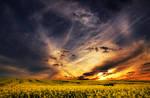 The Luminous Landscape XXVI.
