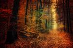 Autumn Walk XXXIV.