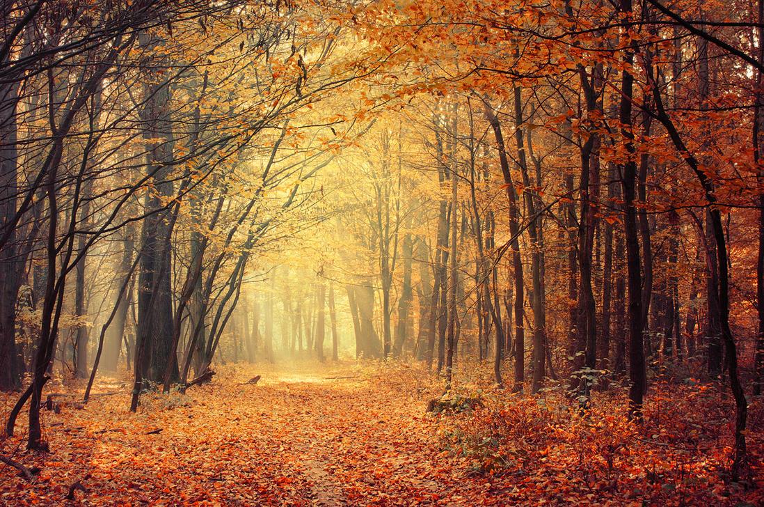 Autumn Walk XXXVI. by realityDream