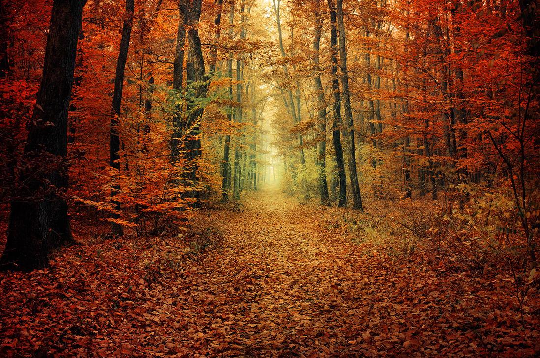 Autumn Walk XXXV. by realityDream