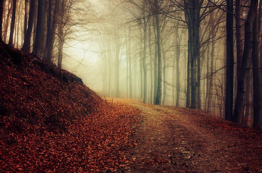 Autumn Walk XXXVII. by realityDream