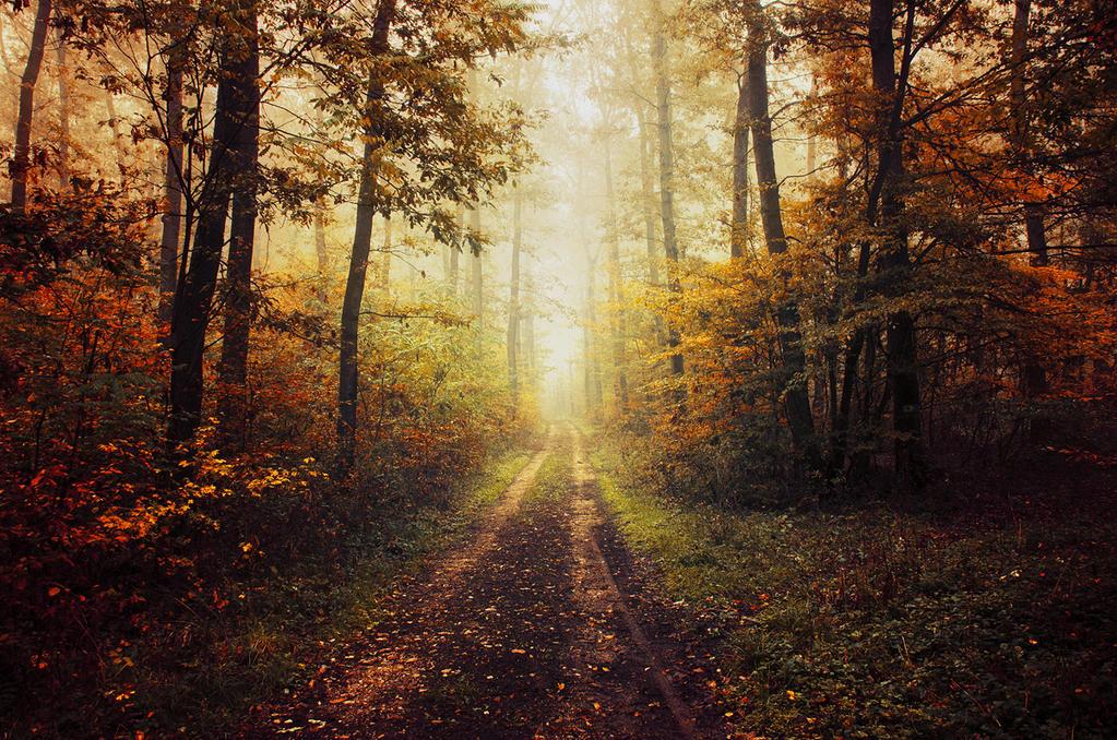 Autumn Walk XLIV. by realityDream