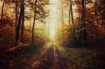 Autumn Walk XLIV.