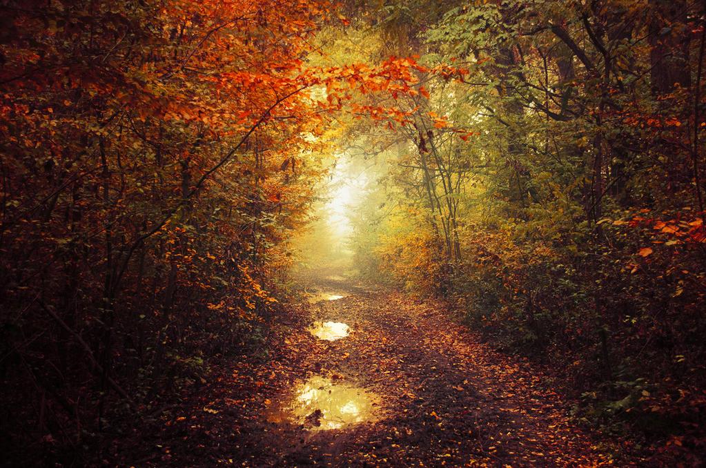 Autumn Walk XLIII. by realityDream