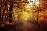 Autumn Walk LIV.