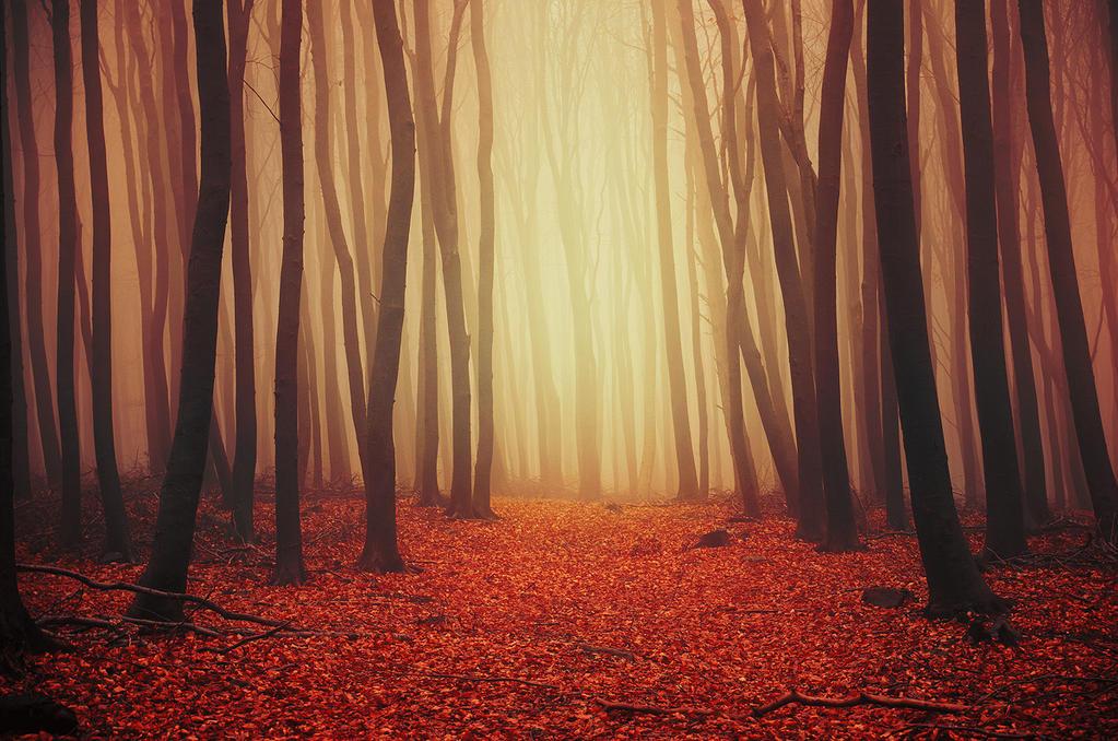 Autumn Wonder II. by realityDream