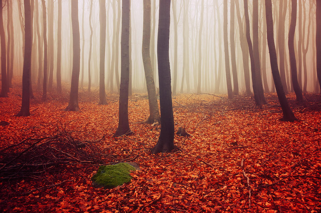 If These Trees Could Talk LVI. by realityDream