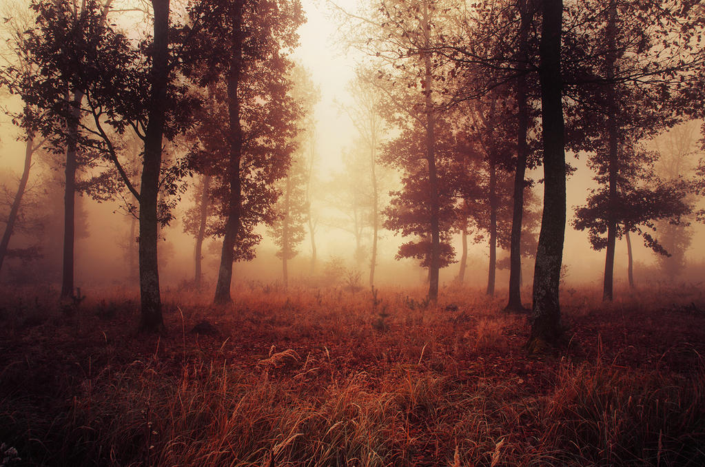 If These Trees Could Talk LIV. by realityDream