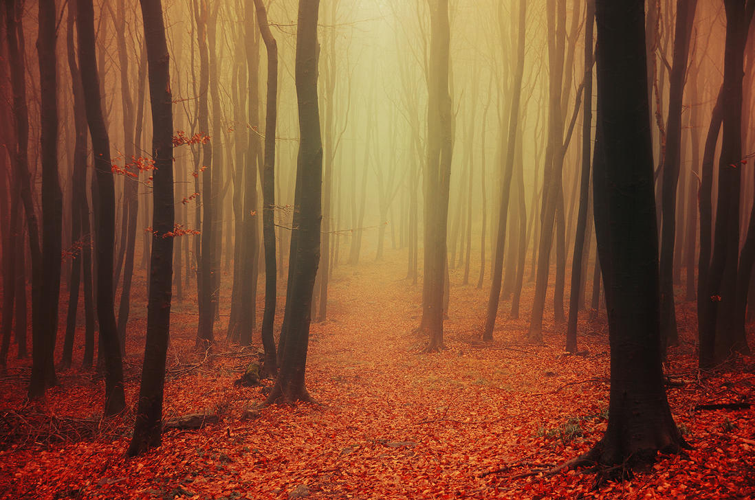 Autumn Wonder III. by realityDream