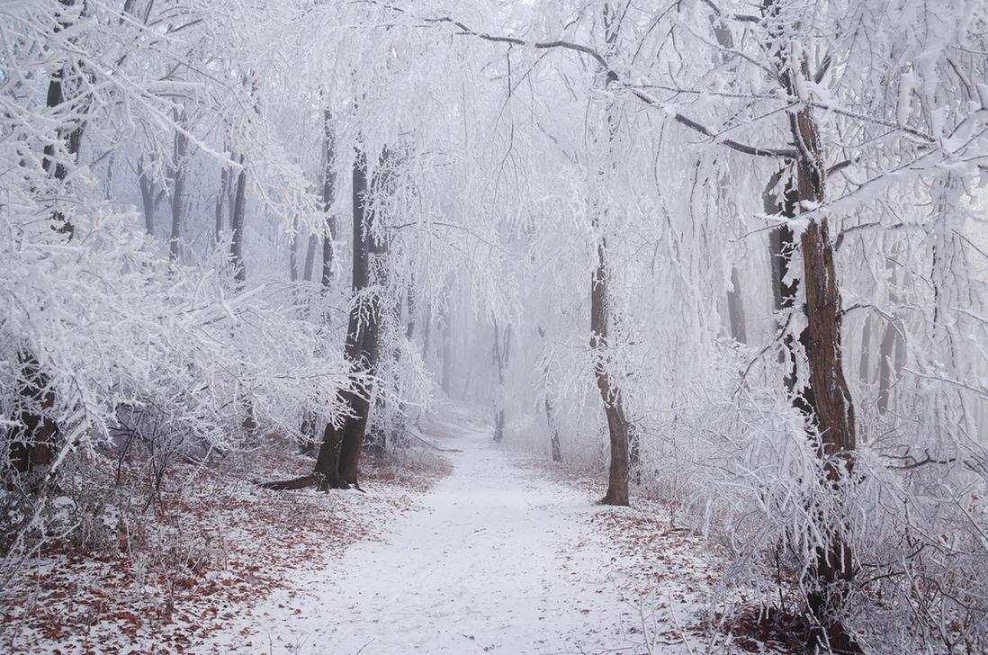 Winter Wonderland III. by realityDream
