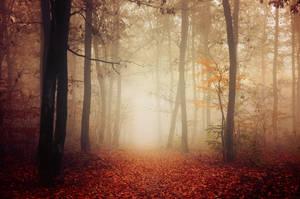 Autumn Walk LIX.
