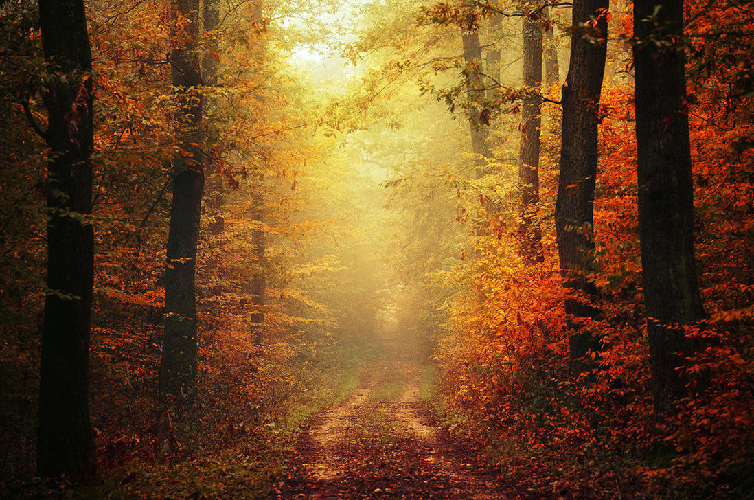 Autumn Walk XLVI. by realityDream