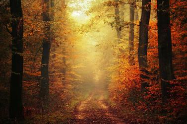 Autumn Walk XLVI. by realityDream
