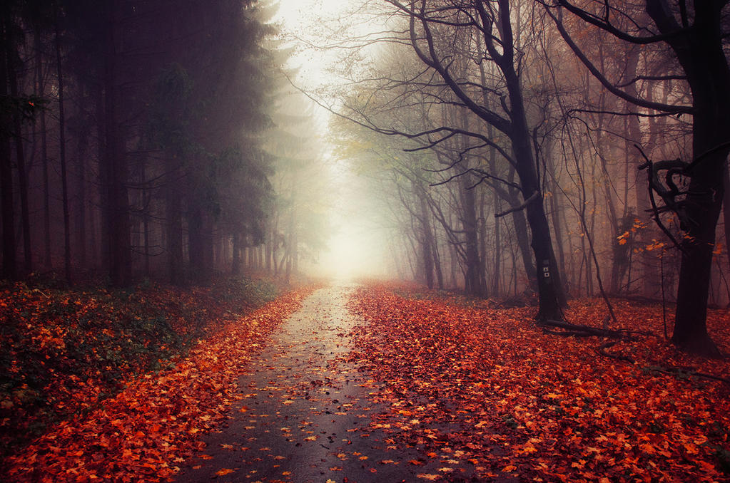 Autumn Journey XXIV. by realityDream
