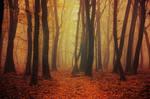 Fading Autumn I.