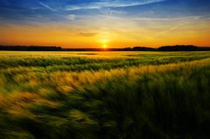 Summer Wheatlands XXIII. by realityDream