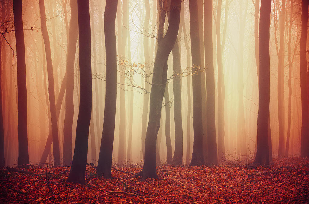 If These Trees Could Talk LVII. by realityDream