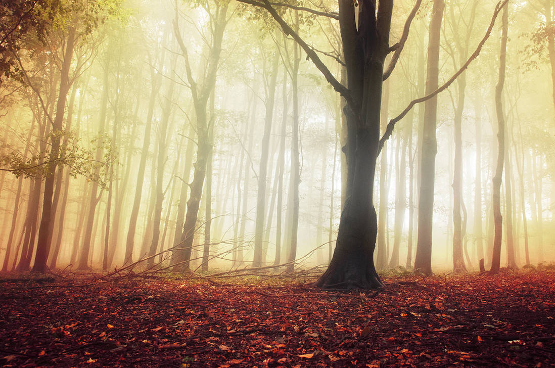 If These Trees Could Talk LXVIII. by realityDream