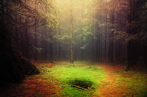 If These Trees Could Talk LXXXIX. by realityDream