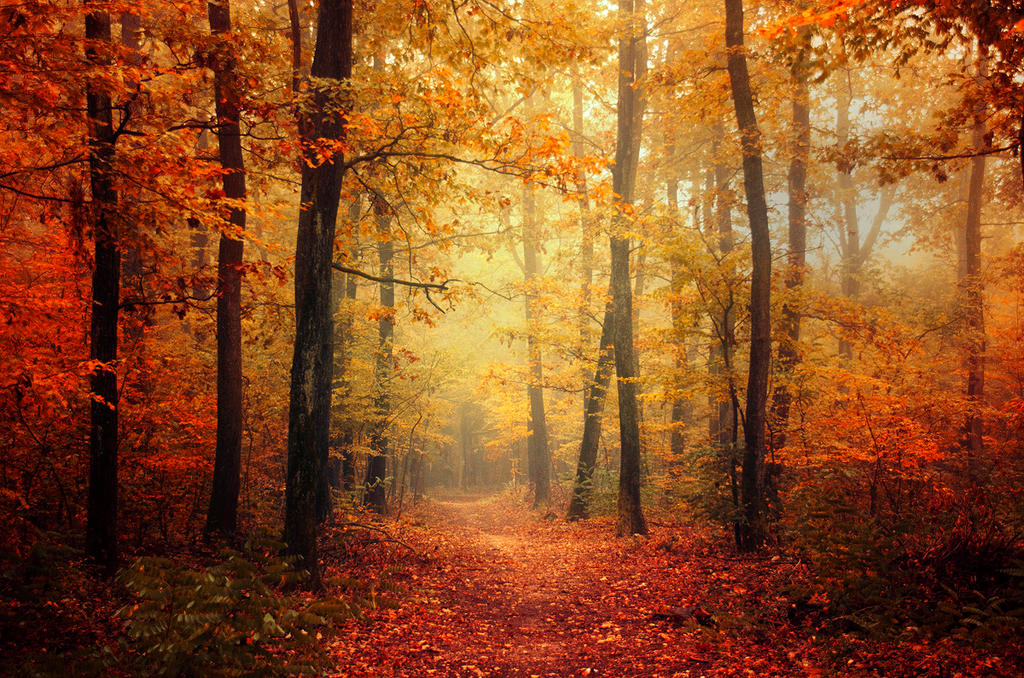 Autumn Walk XLV. by realityDream