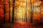 Autumn Walk XLV.
