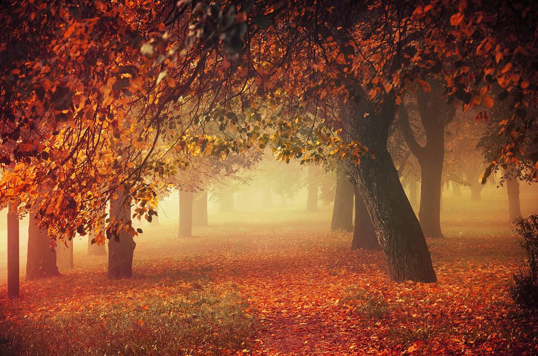 Autumn Dreams I. by realityDream