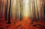 Autumn Walk LVI.
