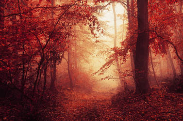 Red Forest IV. by realityDream