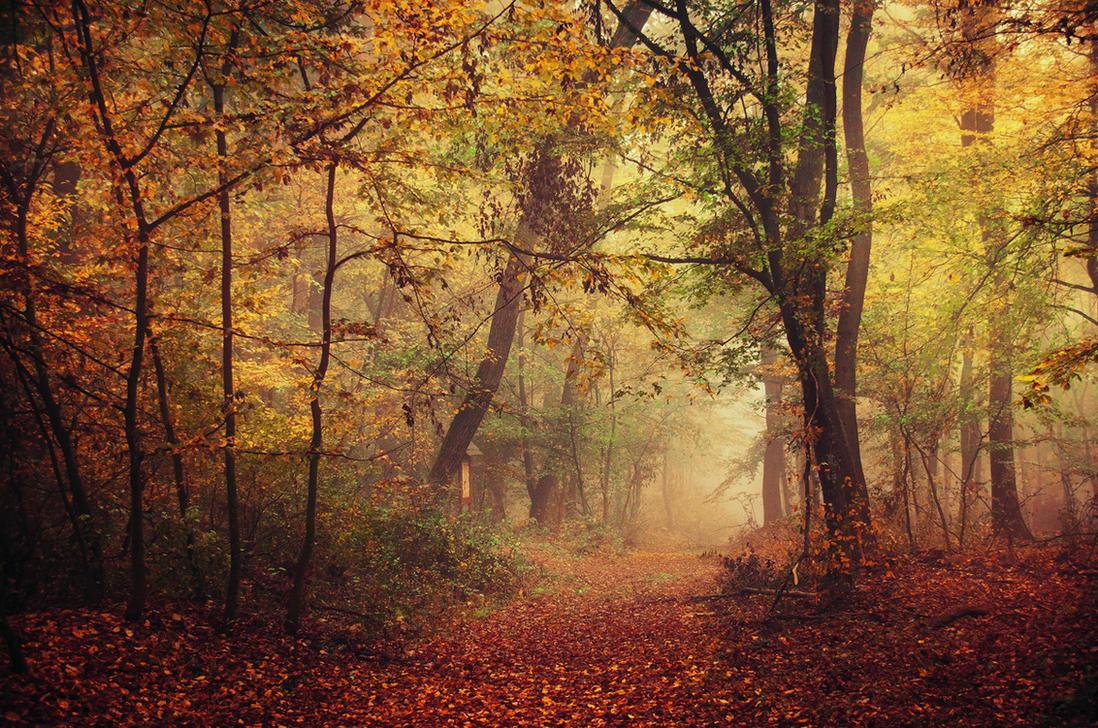 Autumn Walk LXVII. by realityDream