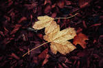 Autumn Remembrance VII.